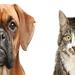 关于你可以饲养的宠物专业英语